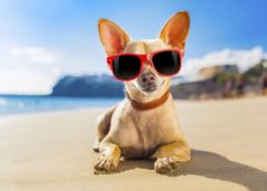 Cani in spiaggia? Come Dove e Quando