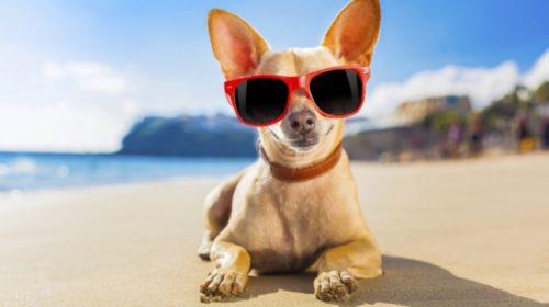 Cane in spiaggia a Porto Recanati
