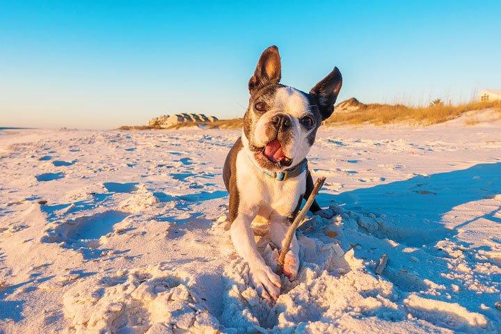Spiagge cani Porto Recanati