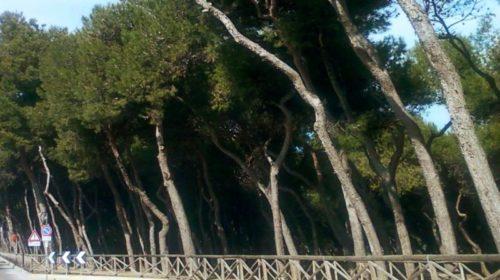 Casolare Pineta Porto Recanati