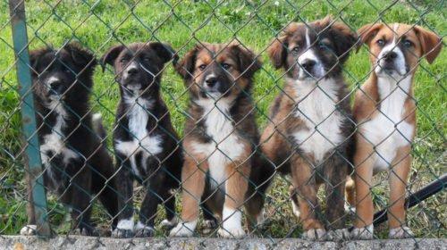 Adozione Cani PortoRecanati