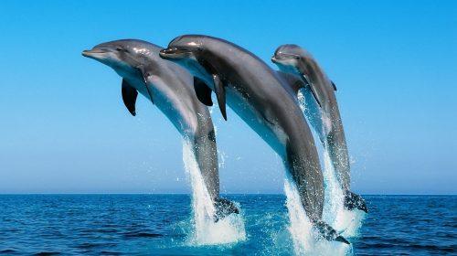 Delfini Portorecanati